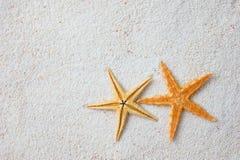 Étoiles de mer en sable Images stock