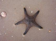 Étoiles de mer en sable sur la plage Photographie stock libre de droits