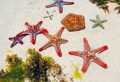 Étoiles de mer en sable sur la plage Photos stock