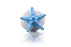 Étoiles de mer et caillou bleus Photo libre de droits
