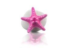Étoiles de mer et caillou roses Images stock