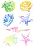 Étoiles de mer et conque Images stock