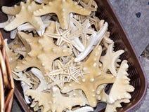 Étoiles de mer et coquillage dans une boutique de souvenirs photo libre de droits