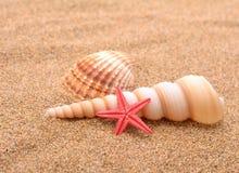 Étoiles de mer et coquillages Photo stock