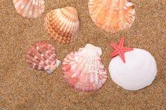 Étoiles de mer et coquillages Photos stock