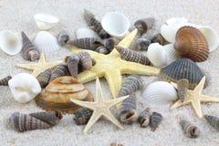 Étoiles de mer et coquillages sur la plage Image stock