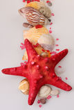 Étoiles de mer et coquilles Photographie stock
