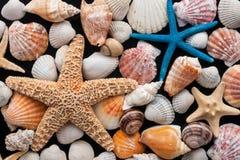 Étoiles de mer et coquilles images libres de droits