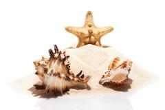 Étoiles de mer et couples des coquilles de mer sur la pile du sable de plage Images stock