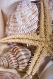 Étoiles de mer et interpréteurs de commandes interactifs Photos stock