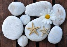 Étoiles de mer et pierres Image stock