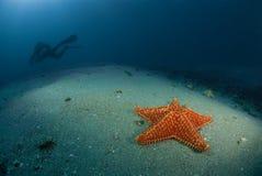 Étoiles de mer et plongeur de Rebreather Photos libres de droits