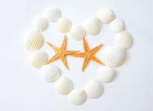 Étoiles de mer et seashell Image libre de droits