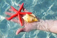 Étoiles de mer et seashell de fixation de main images stock