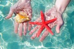 Étoiles de mer et seashell de mains dans l'eau tropicale photographie stock libre de droits