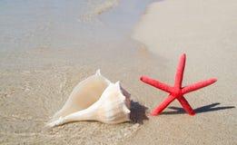 Étoiles de mer et seashell de plage sur le sable blanc images stock