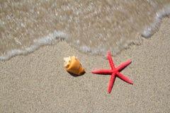 Étoiles de mer et seashell de plage sur le sable blanc photo libre de droits