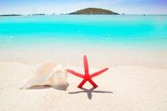 Étoiles de mer et seashell en plage tropicale photo libre de droits
