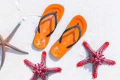 Étoiles de mer de flopsand de secousse sur la plage sablonneuse blanche Photo stock
