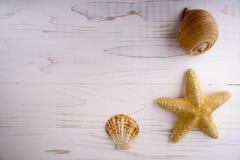 Étoiles de mer de jaune et de coquilles sur le fond blanc Photos stock