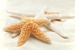 étoiles de mer molles de sable de plage images libres de droits