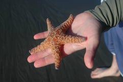 Étoiles de mer oranges Photographie stock libre de droits