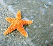 étoiles de mer oranges de sable Photographie stock libre de droits