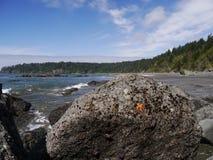 Étoiles de mer oranges et pourpres sur le rocher Photos stock