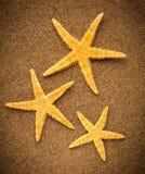 Étoiles de mer ou étoiles de mer Photographie stock libre de droits