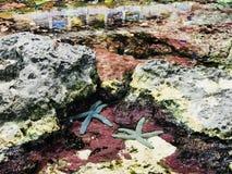 Étoiles de mer ou étoiles de mer Images libres de droits