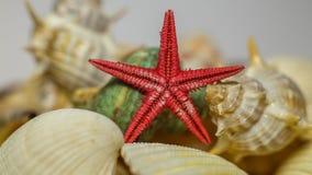 Étoiles de mer parmi des coquillages Images stock