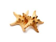 Étoiles de mer pointues Images stock