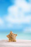 Étoiles de mer rares d'eau profonde avec l'océan, la plage et le paysage marin Photos libres de droits