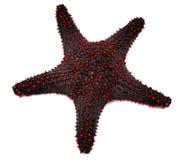Étoiles de mer rouges Photo stock