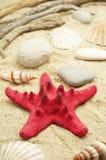 Étoiles de mer rouges Photos libres de droits