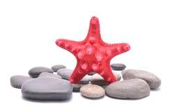 Étoiles de mer rouges au-dessus du groupe de pierres sur le fond blanc Photos stock