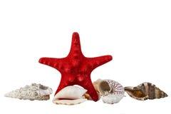 Étoiles de mer rouges et quelques coquilles de mer d'isolement sur le blanc Photos libres de droits