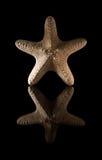 Étoiles de mer sèches Images stock