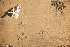 Étoiles de mer sèches sur le fond de plage Photo stock