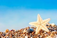 Étoiles de mer se trouvant sur la plage de sable. Image libre de droits