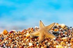 Étoiles de mer se trouvant sur la plage de sable. Photos libres de droits