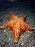 Étoiles de mer sous la passerelle Photographie stock