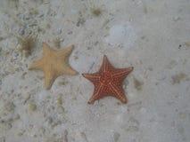 Étoiles de mer sous-marines au Panama Photos stock
