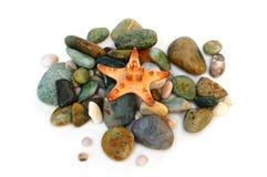Étoiles de mer sur la pierre Photo libre de droits