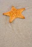 Étoiles de mer sur la plage Photos stock