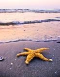 Étoiles de mer sur la plage Images stock