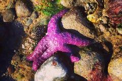 Étoiles de mer sur la plage photo libre de droits