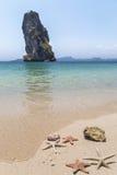 Étoiles de mer sur la plage au foyer sélectif de la Thaïlande sur les étoiles de mer dans le premier plan Images libres de droits