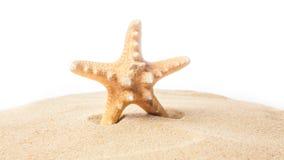 Étoiles de mer sur la plage blanc d'étoiles de mer d'isolement par fond Photo stock