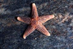 Étoiles de mer sur la plage de mer Image libre de droits